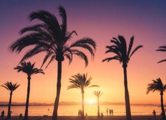 Palmen mit bunten Himmel bei Sonnenuntergang